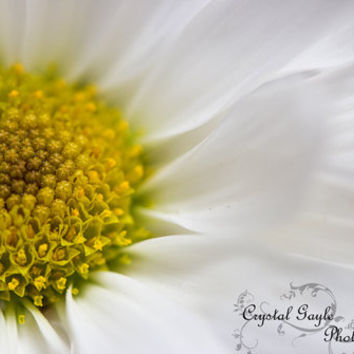 White Daisy Photography Spring Flowers Fine Art Print Flower Wall Decor Spring Wedding