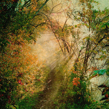 Colorful Misty Sunlit Path -  Fine Art Photo - FREE SHIPPING