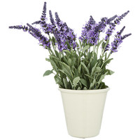 Buy Lavender in a Pot, Small online at John Lewis
