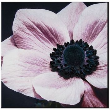 Curio Floral with Glitter Canvas Wall Art