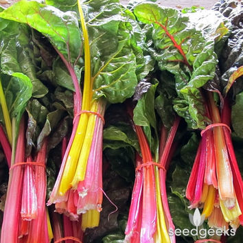 Rainbow Swiss Chard Heirloom Seeds - Non-GMO, Open Pollinated, Untreated