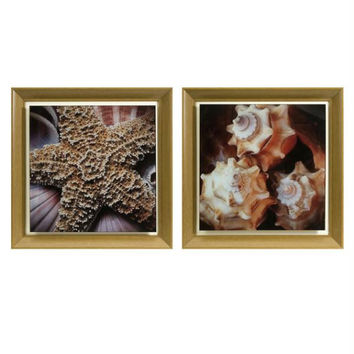 2 Photographic Wall Art - Seashell & Starfish