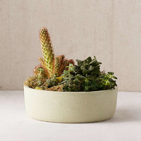 """12"""" Succulent Planter 