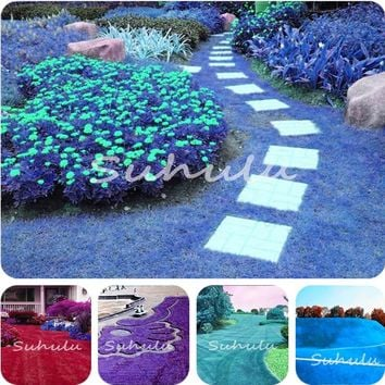 1000 Pcs Rare Color Japanese Forest Grass Seeds, Perennial Evergreen Lawn Seeds, Beautiful Garden Ornamental Plant, Easy to Grow