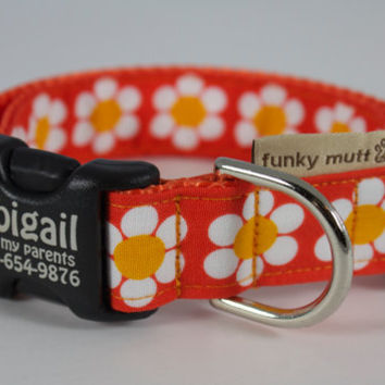 Tangerine Daisy-- custom made collar with pet identification information on buckle