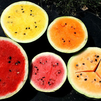 Rainbow Watermelon Garden, five miniature heirlooms, 50 non GMO seeds, compact vines, small fruit, great flavor, crazy colors, garden gift