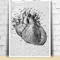 Human Heart print European home decor Anatomy poster Black and white TO189