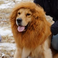 Dogloveit Large Pet Dog Cat Lion Wigs Mane Hair Festival Party Fancy Dress Clothes Costume(Please be aware of fake products from other sellers)