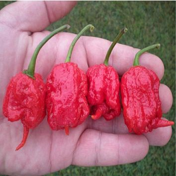 "Genuine Fresh Rare Red ""Carolina Reaper"" Pepper Seeds (hot chilli ) Organic Vegetable  200 seeds/bag"