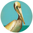 Anderson Design Group's Pelican Circle Decal