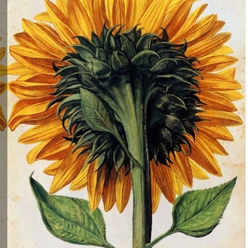 Sunflower Floral Canvas Wall Art Print