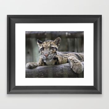 Wild Baby Leopard Framed Art Print by Sea the Forest PhotoArt