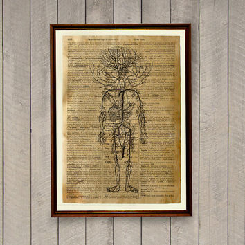 Rustic vintage decor Human anatomy poster Medical illustration