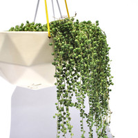 General Store | Kelly Lamb Geodesic Planter