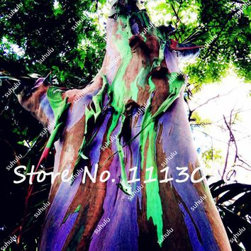 100Pcs Rare Rainbow Eucalyptus Seeds Giant Showy Tropical Tree Seeds For Garden Planting Baby And Lover Outdoor Bonsai Gift