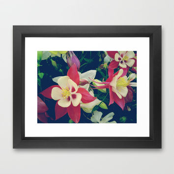Aquilegia flowers Framed Art Print by cycreation