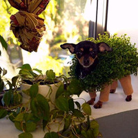 Pet Halloween costume for your pet -  Chia Pet inspired .... .dog ...cat ... plant terra cotta legs