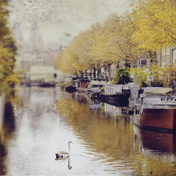 Photography Print, Swan Art, Large Wall Art, Amsterdam Canal, Europe Travel, Houseboats, Yellow, Grey, Brown, Marsala - The Swan