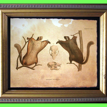 Flying Squirrels - Vintage Collage Art Print on Tea Stained Paper - Vintage Art Print