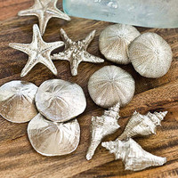 Regina Andrew Decor Set of 12 Assorted Silver Mini Seashells