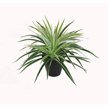 "12"" Decorative Artificial Potted Two Tone Green and White Grass Plant with Black Pot"