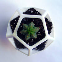 3D Printed  Dodecahedron Planter, Geometric Terrarium , Cactus Planter, Cactus Flower Guard, Geodesic Container, Math Art, Polyhedra