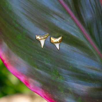 Mini Shark Tooth Stud Earrings - Gold