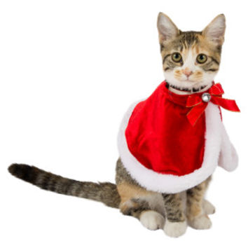 Whisker City® Santa Cat Cape