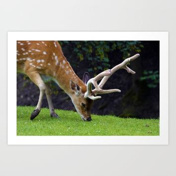 Fallow Deer Art Print by Mixed Imagery