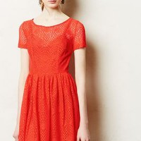 Stella Petite Dress by Plenty by Tracy Reese Red