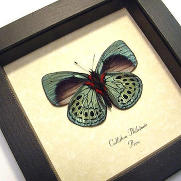 Real Framed Butterfly Gifts Best Seller 14 Years 355V