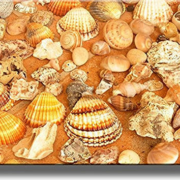 Sea Shells Bathroom Picture on Stretched Canvas, Wall Art Decor, Ready to Hang!