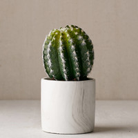 Small Cactus Decor | Urban Outfitters