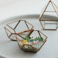 Glass ring box with succulents inside Only One