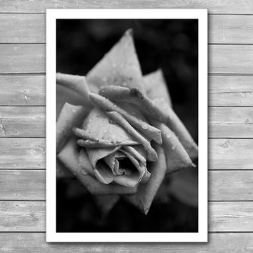 Rose, Flowers Photo Print, Black and White Print, Framed Photo Art Print, Flowers in Drops, Fine Art Photography, Macro Flower, BW Poster