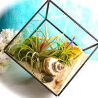 Geometric Terrarium Kit ~ Contemporary Shape Terrarium with Air Plants ~ Office Decor ~ Father's Day ~ Mother's Day Gift ~ Plant Gift ~ Geo