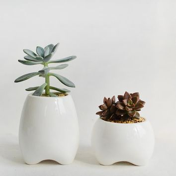 Set of 2 Tooth Shape Flower Pots White Ceramic Planter Teeth Mini Desktop Succulent Planter pots (without plants)