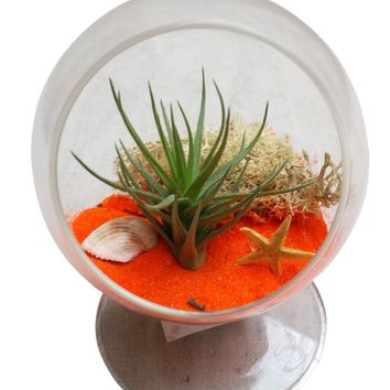 Orangie Circle Airplant Terrarium