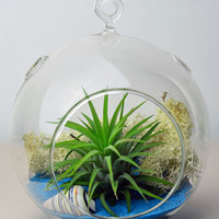 Air Plant Terrarium // Hanging Glass Orb Terrarium // Home and Garden // Living Home Decor // Gift Ideas // Blue Sand // Shells