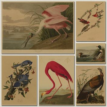 Bird species collection Retro poster Vintage painting home decor classic print and picture bar cafe paint wall art sticker