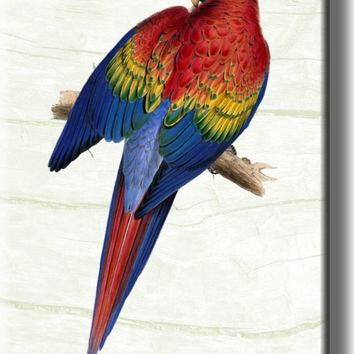 Red Yellow Blue Parrot Picture on Acrylic , Wall Art Décor, Ready to Hang