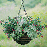 Old Fashioned - HANGING BASKET AND COCO-FIBER LINER SET