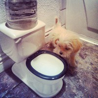 Toilet Water Dish