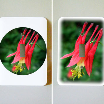 Decorated light switch plate, Canada Columbine , floral decor, gardener, wall decoration, Aquilegia canadensis, home decor