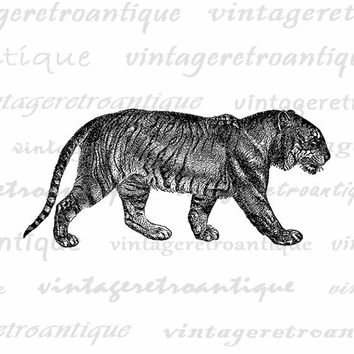 Printable Image Bengal Tiger Digital Download Illustration Graphic Vintage Clip Art Jpg Png Eps  HQ 300dpi No.2684