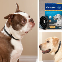 Adaptil Constant Companion Collar|Dog Behavior Control