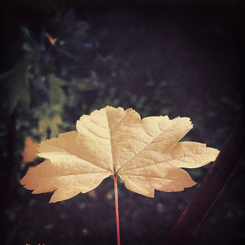 Nature Photography | Leaf | Abstract | Neutral | Autumn Photo | Fall Photography | Gold | Brown | Minimalist Photography