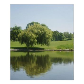 Weeping willow tree posters. poster