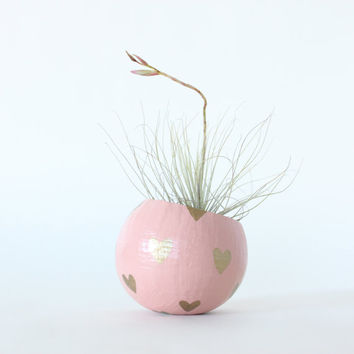 Air Plant Planter with Air Plant - Peach with Gold Hearts. Valentine's Day Gift