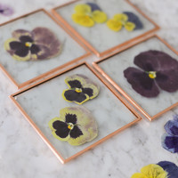 Set of 4 Pressed Flower Coasters, Pansies (glass and copper)
